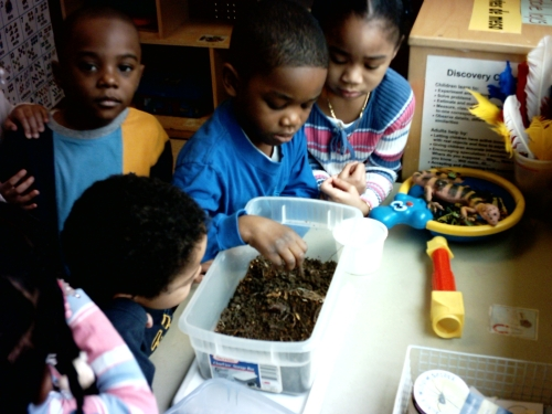 Day Nursery children study worms brought into their classroom.