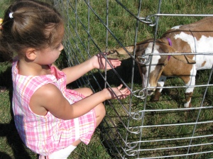 A goat, a rabbit, and a rooster were among the animals that the children could see up close.