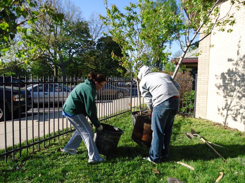 Volunteers prepare trees for planting