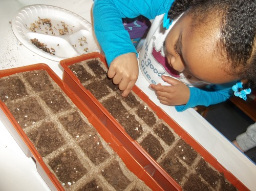 Day Nursery preschooler planting seeds